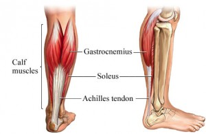 Achilles tendon 300x195